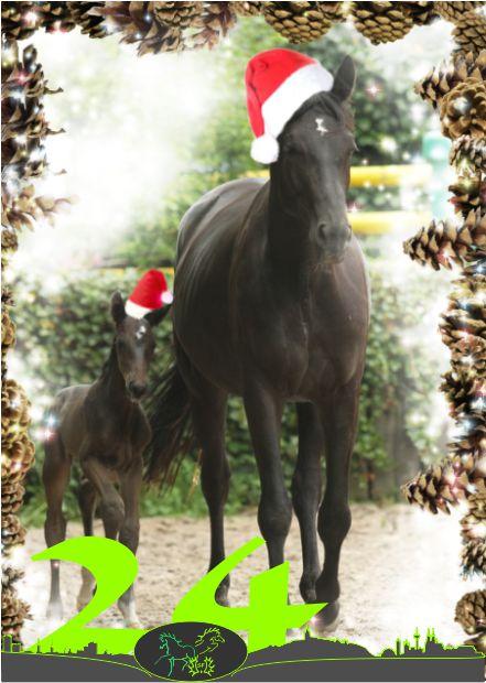 Frohe Weihnachten Pferd.24 Frohe Weihnachten Trakehner Sf Leistung Geist Und