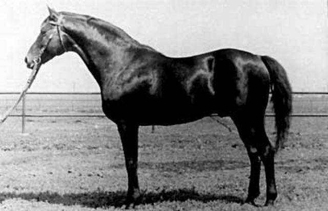 Horse_Etjud-_2big