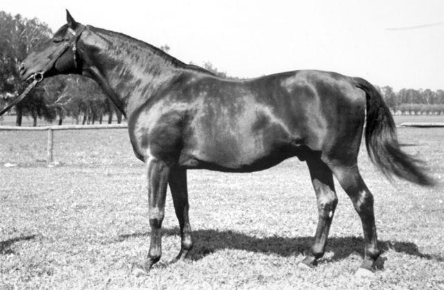 Horse_Pilger-_2big